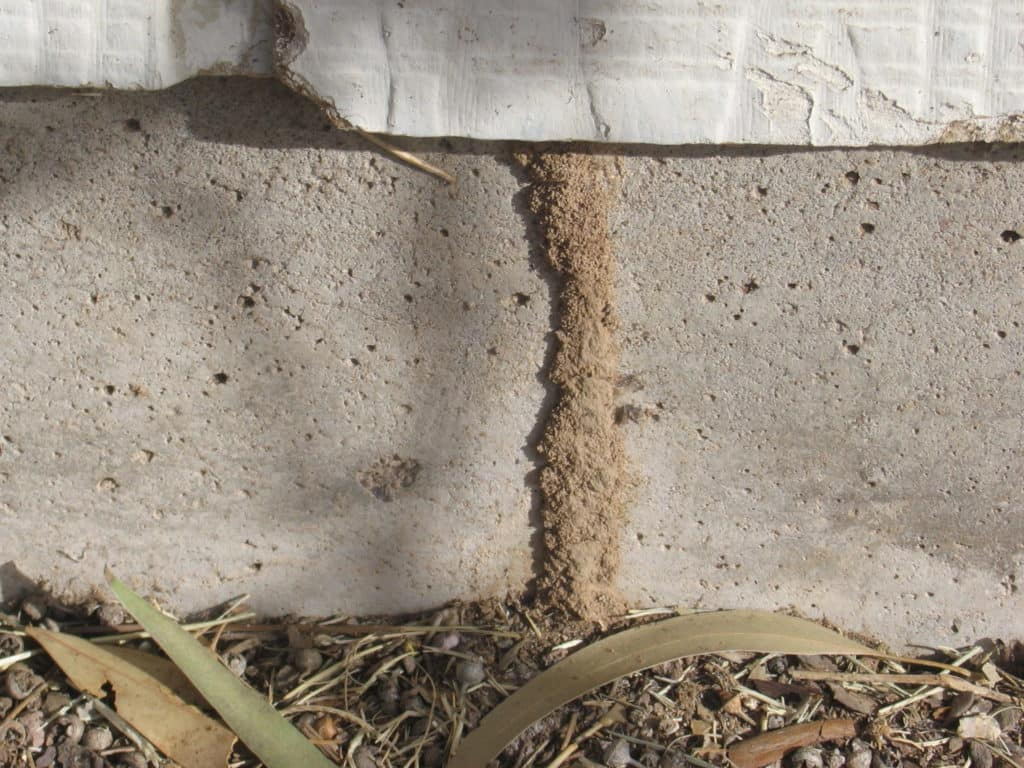 Termite Inspection Wdi Va Loan Fha Loan Austin San